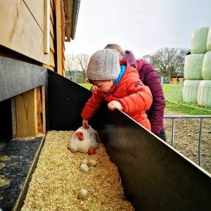 Huhn streicheln Eier Bauernhof
